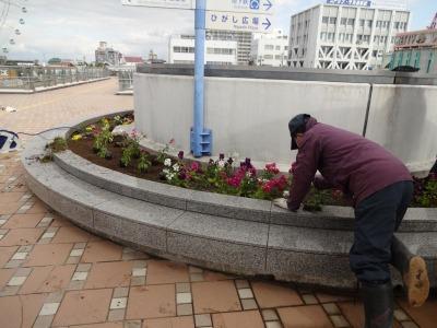 名古屋港水族館前花壇の植栽R2.2.17_d0338682_17021482.jpg
