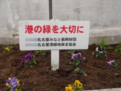 名古屋港水族館前花壇の植栽R2.2.17_d0338682_17024516.jpg