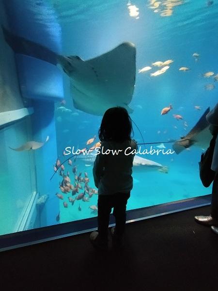 初めての水族館♪_c0171485_06454896.jpg