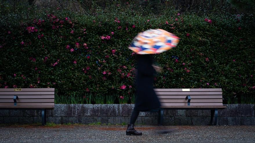 雨に負けない色たち_d0353489_23202546.jpg