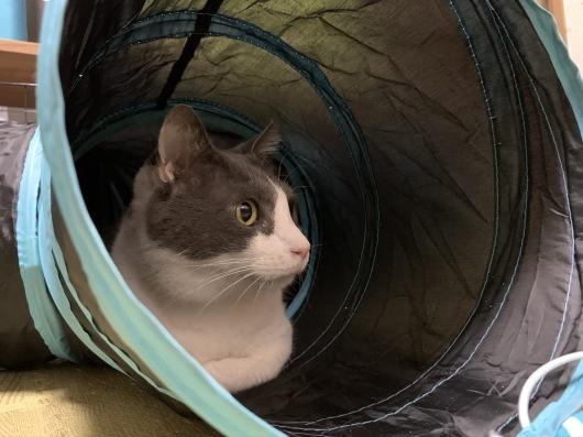 【お預かり猫】優しいケリー。_a0170297_20540830.jpeg