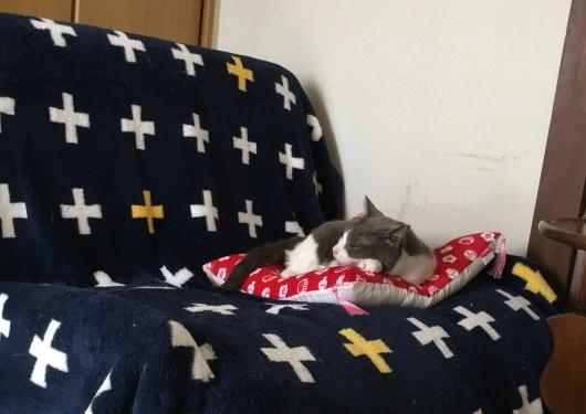 【お預かり猫】優しいケリー。_a0170297_20544676.jpeg