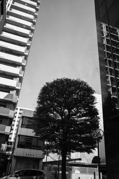 2020.02.23 Tree_a0390712_16255923.jpg