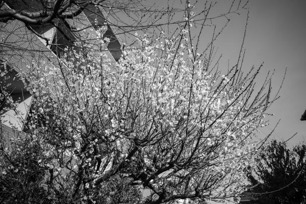 2020.02.23 Tree_a0390712_16262245.jpg