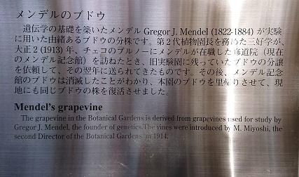 メンデルの葡萄の木 有川知津子_f0371014_00235806.jpg