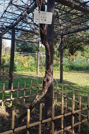 メンデルの葡萄の木 有川知津子_f0371014_00242454.jpg