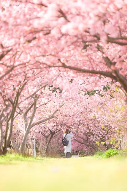 桜色のトンネル_a0020615_22501657.jpg