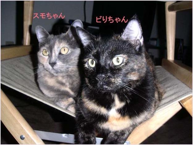 サビ猫さん集合~_f0166234_03061314.jpg