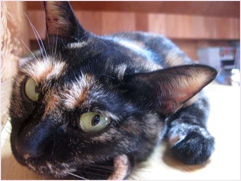 サビ猫さん集合~_f0166234_03070065.jpg