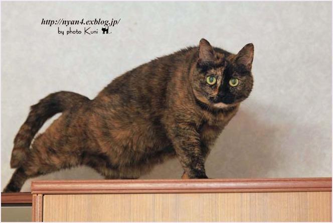 サビ猫さん集合~_f0166234_03301824.jpg
