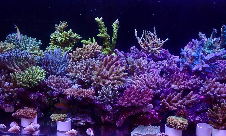 入荷情報~海水魚 2020・2・19~_d0221436_22545726.jpg