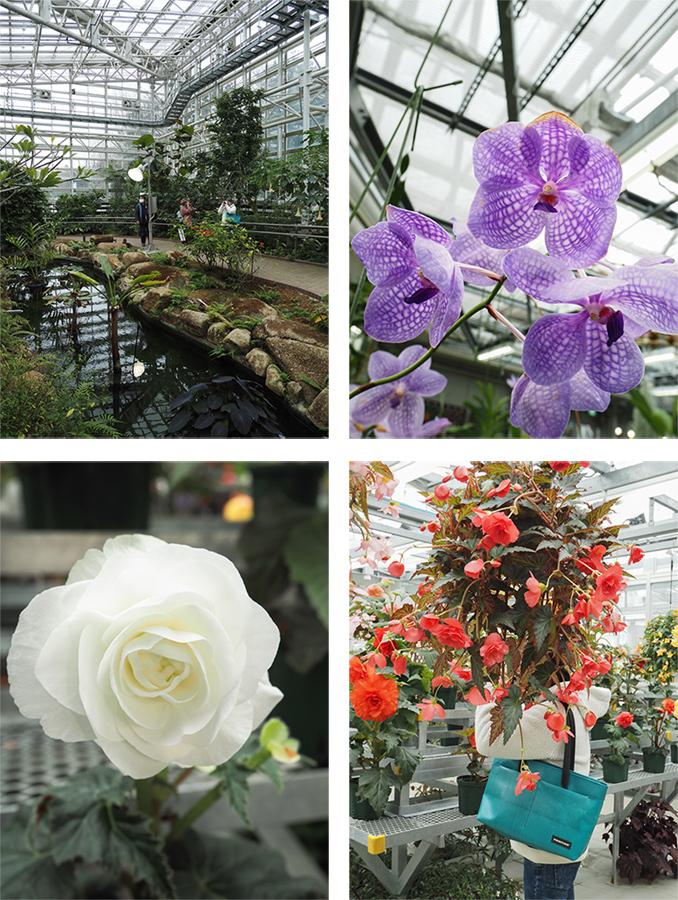 Hello from Tokyo 119 神大植物公園・大温室_a0003650_22380659.jpg