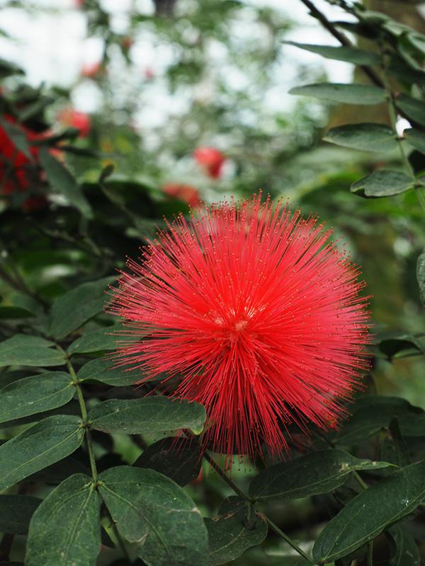 Hello from Tokyo 119 神大植物公園・大温室_a0003650_22383161.jpg