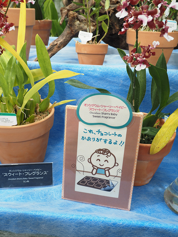 Hello from Tokyo 119 神大植物公園・大温室_a0003650_22390690.jpg
