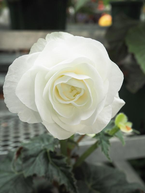 Hello from Tokyo 119 神大植物公園・大温室_a0003650_22394360.jpg