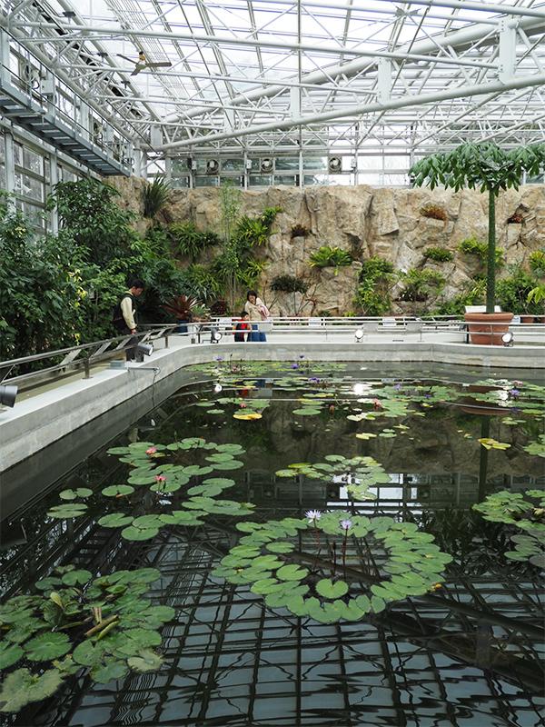 Hello from Tokyo 119 神大植物公園・大温室_a0003650_22394836.jpg