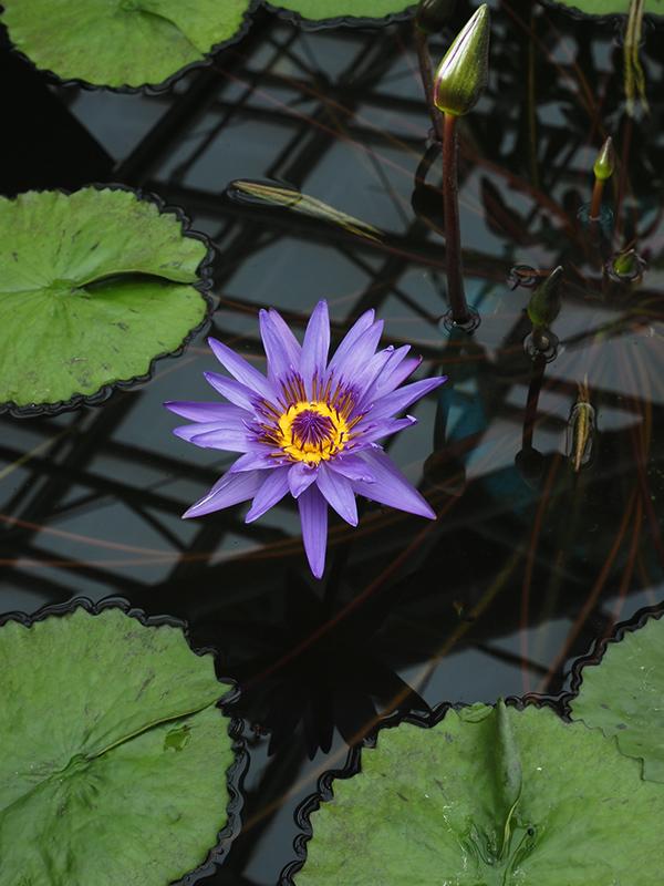 Hello from Tokyo 119 神大植物公園・大温室_a0003650_22401844.jpg