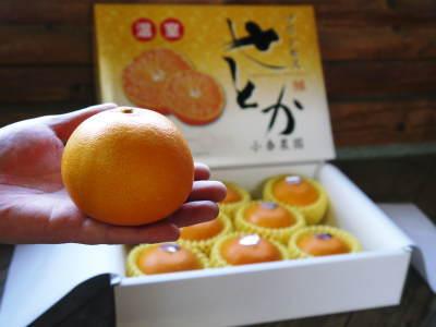 究極の柑橘『せとか』 令和2年の出荷スタート!収穫の様子を現地取材!(後編)_a0254656_18144803.jpg