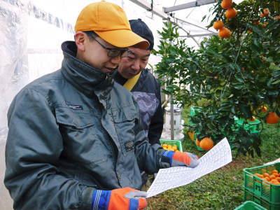 究極の柑橘『せとか』 令和2年の出荷スタート!収穫の様子を現地取材!(後編)_a0254656_18325736.jpg