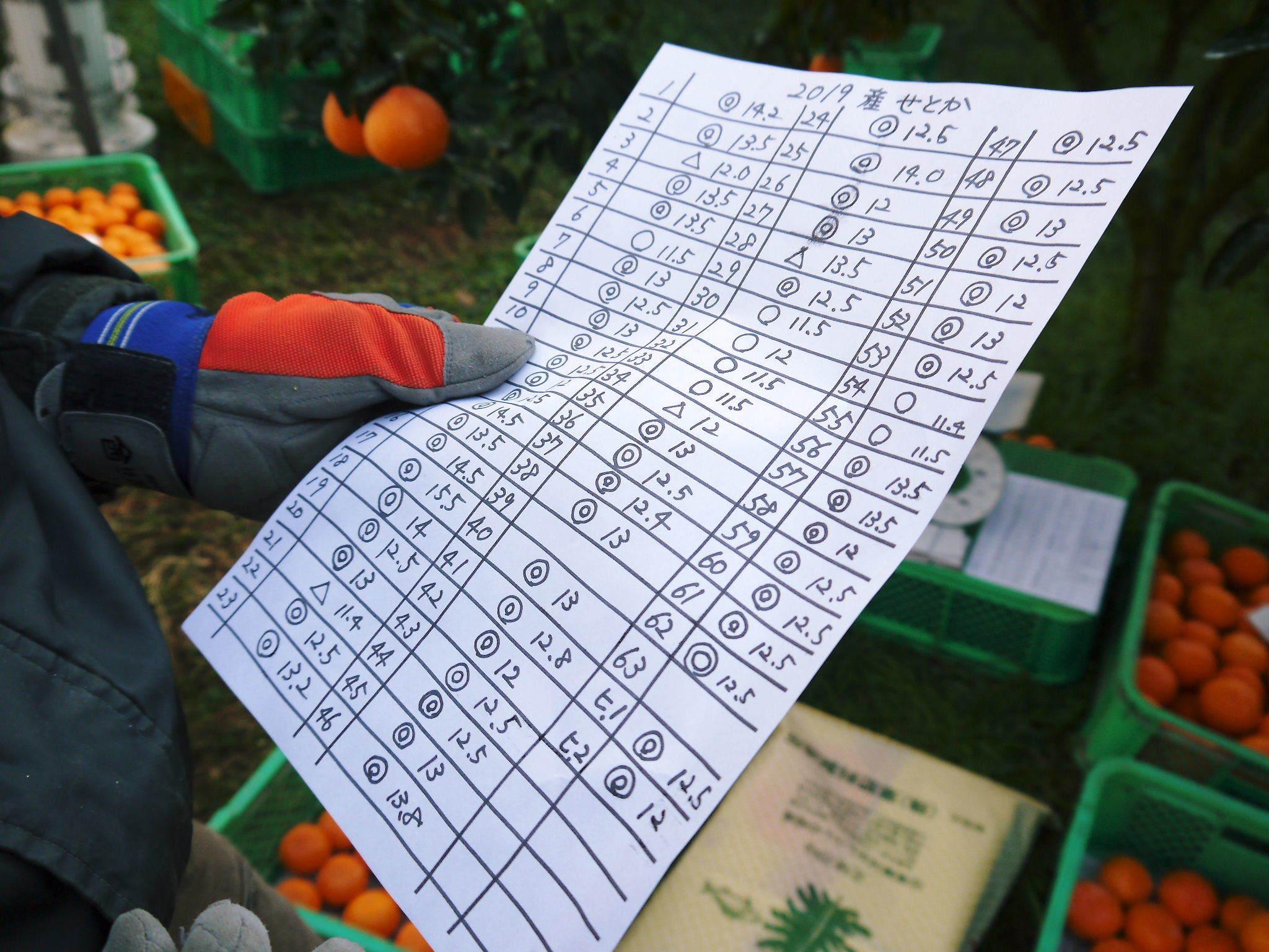 究極の柑橘『せとか』 令和2年の出荷スタート!収穫の様子を現地取材!(後編)_a0254656_18355706.jpg