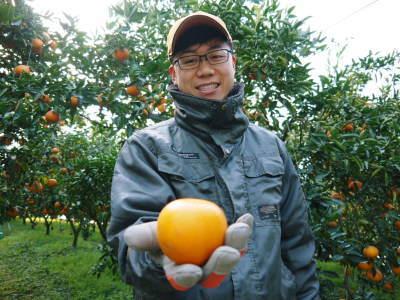 究極の柑橘『せとか』 令和2年の出荷スタート!収穫の様子を現地取材!(後編)_a0254656_18551187.jpg