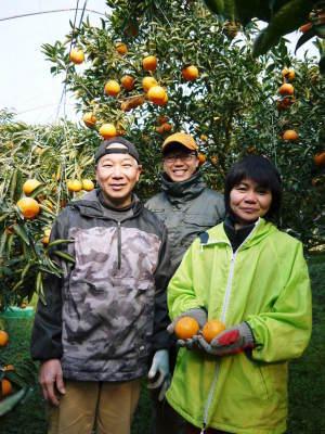 究極の柑橘『せとか』 令和2年の出荷スタート!収穫の様子を現地取材!(後編)_a0254656_19113651.jpg