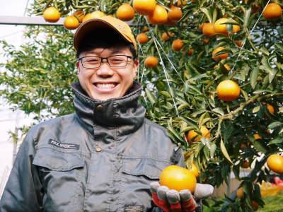 究極の柑橘『せとか』 令和2年の出荷スタート!収穫の様子を現地取材!(後編)_a0254656_19181644.jpg