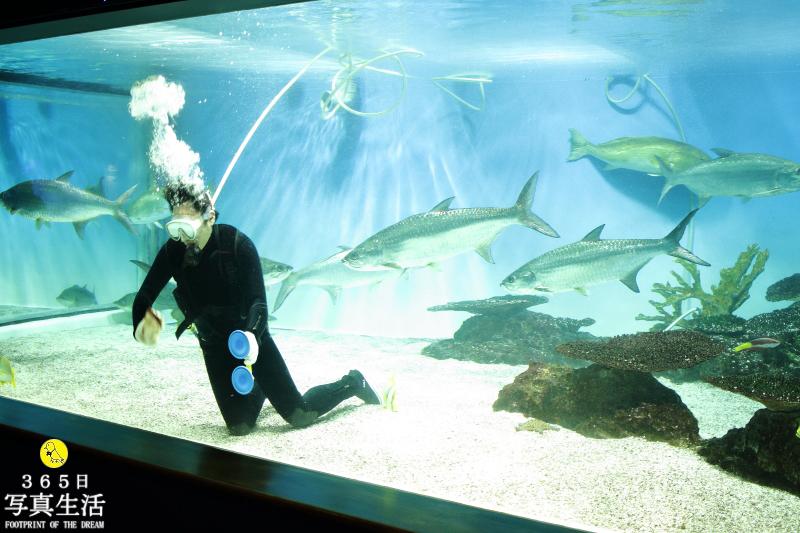 水族館_f0358558_02024850.jpg