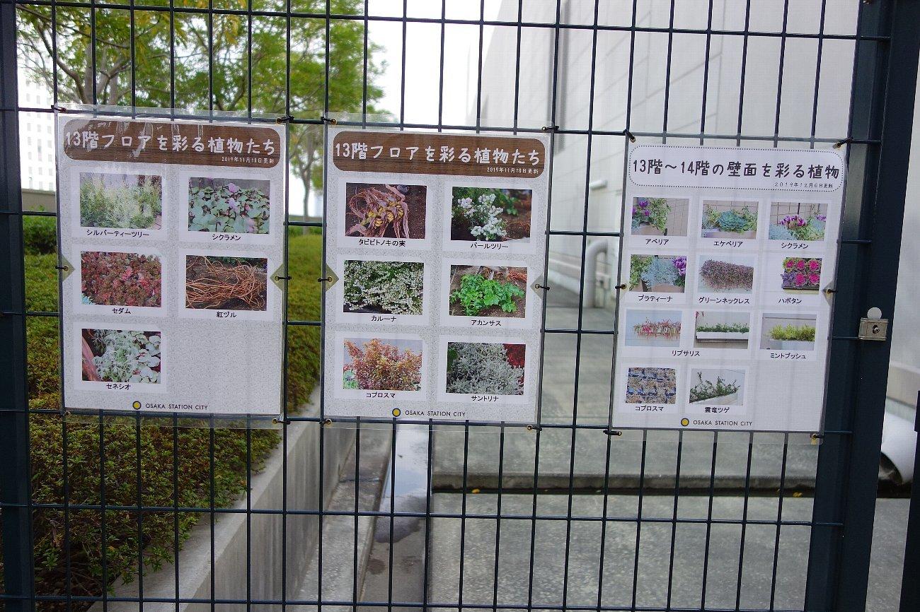 大阪ステーションシティ  天空の農園_c0112559_09012756.jpg