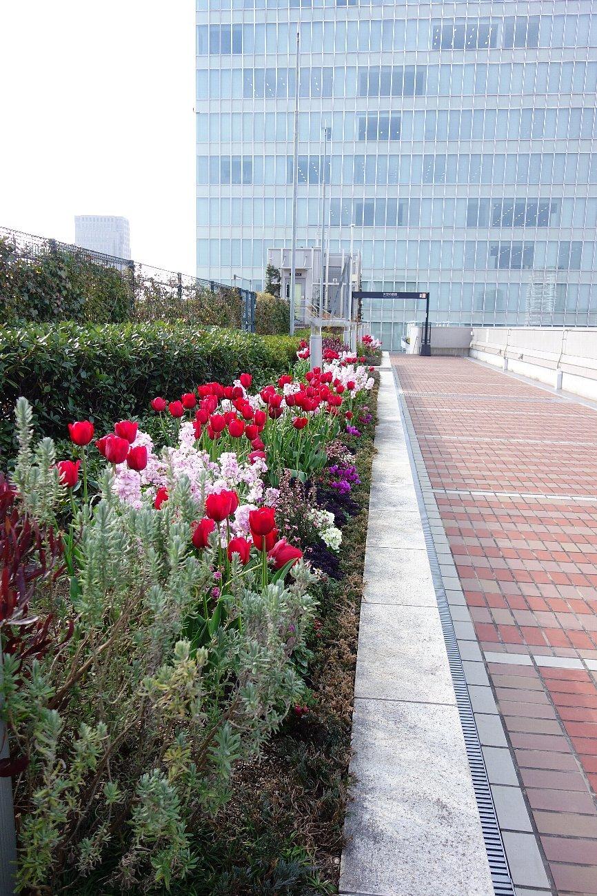 大阪ステーションシティ  天空の農園_c0112559_09073697.jpg