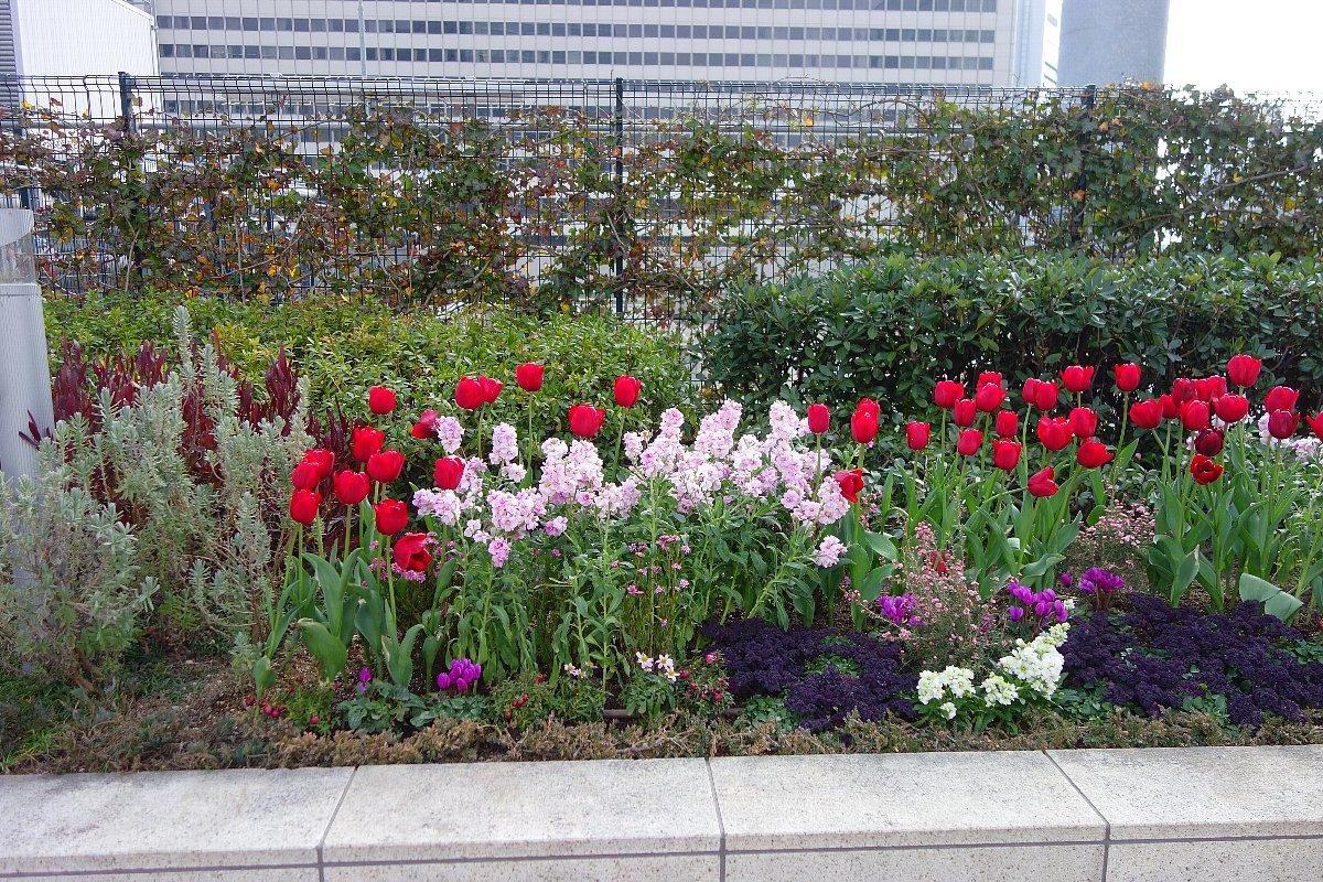 大阪ステーションシティ  天空の農園_c0112559_09081169.jpg