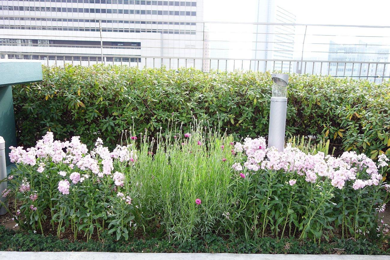 大阪ステーションシティ  天空の農園_c0112559_09082930.jpg