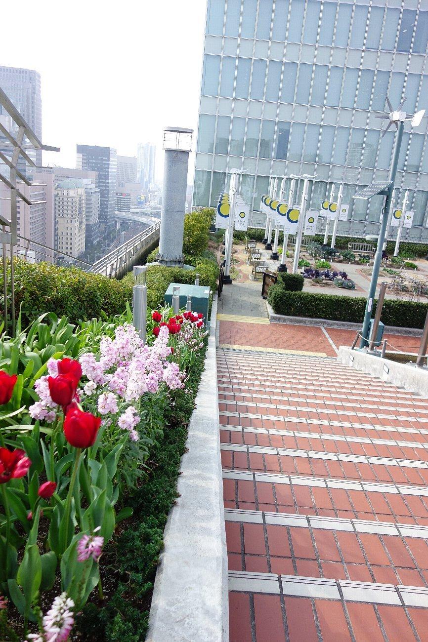 大阪ステーションシティ  天空の農園_c0112559_09092227.jpg