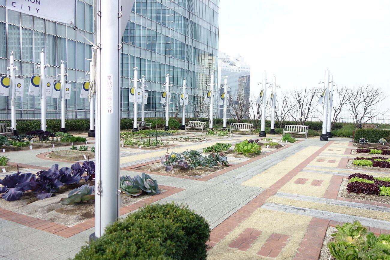 大阪ステーションシティ  天空の農園_c0112559_09102462.jpg
