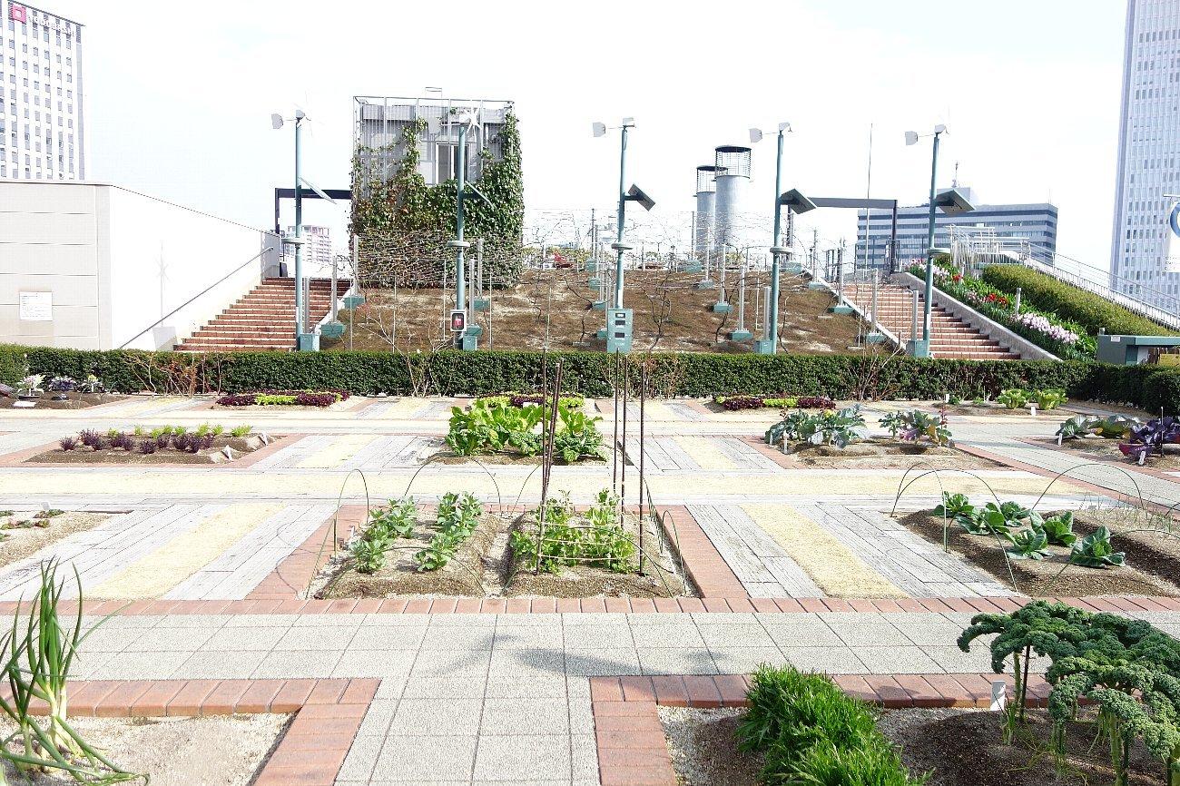 大阪ステーションシティ  天空の農園_c0112559_09112696.jpg