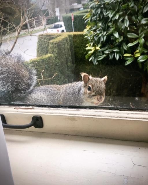 窓ごしの可愛い訪問者_d0129786_18015565.jpg