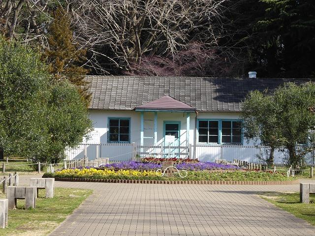 代々木公園の河津桜、きれいだったよ~♪ ミモザもね♪_b0287088_15462306.jpg