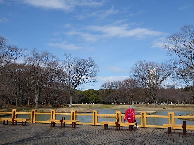 代々木公園の河津桜、きれいだったよ~♪ ミモザもね♪_b0287088_15503889.jpg