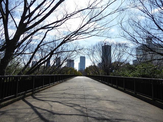 代々木公園の河津桜、きれいだったよ~♪ ミモザもね♪_b0287088_15514198.jpg