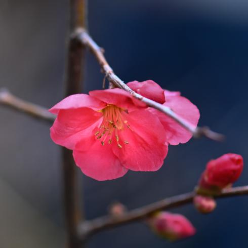 もうすぐ春が 01_f0099102_11215712.jpg