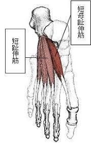 体を整えるために柔軟性を高める(準備運動⑤)_d0358103_16512187.jpg
