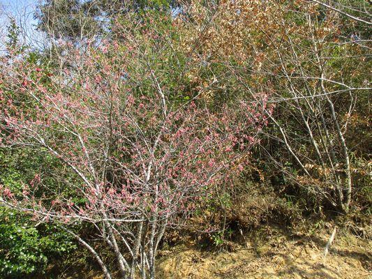春はすぐそこ_a0154110_16074905.jpg
