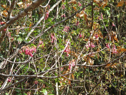 春はすぐそこ_a0154110_16075127.jpg