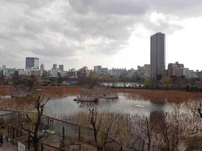 ケープペンギンのヒナと西園へやって来たペッカリー三姉妹(上野動物園 March 2019)_b0355317_21495651.jpg
