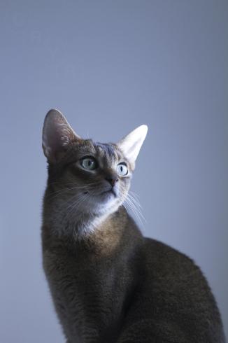 [猫的]スポットライト_e0090124_08483632.jpg