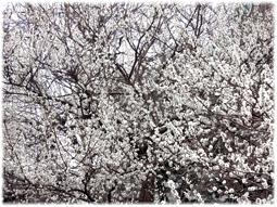 「日本書紀成立1300年 特別展 出雲と大和」_d0221430_17223258.jpg