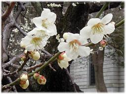 「日本書紀成立1300年 特別展 出雲と大和」_d0221430_17224635.jpg