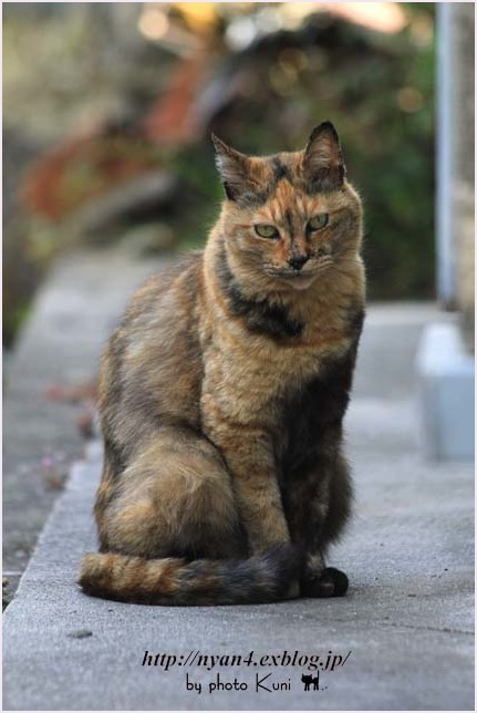 サビ猫の魅力(外で出会ったサビ猫さん)_f0166234_00024481.jpg