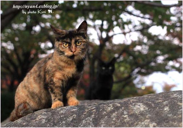 サビ猫の魅力(外で出会ったサビ猫さん)_f0166234_00043248.jpg
