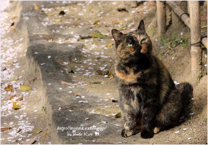 サビ猫の魅力(外で出会ったサビ猫さん)_f0166234_00075137.jpg